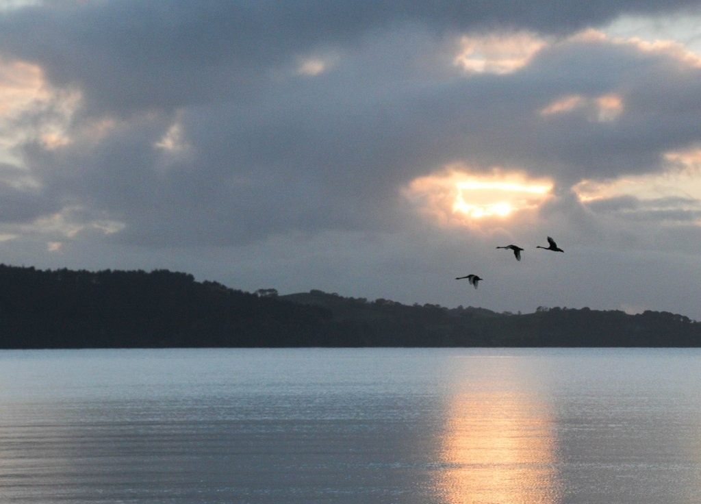 Geese crossing Kawau Bay at sun rise. 10x12 canvas $200