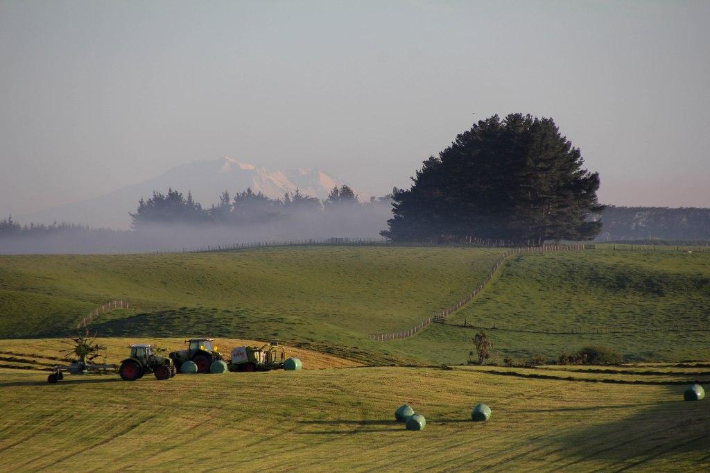 Looking across rural Manawatu towards Mt Ruapehu, over 150km's distant. 8x12 canvas $200