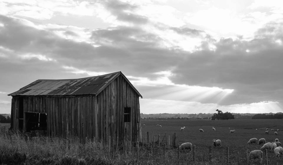 B&W of cool old barn 8x10 canvas $200