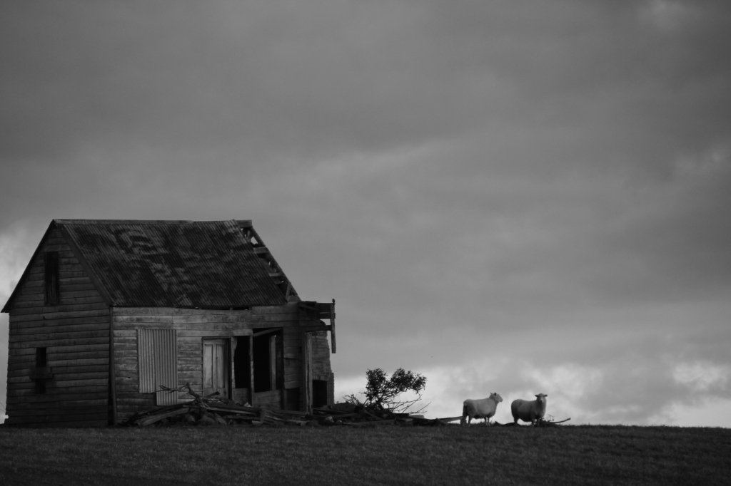 B&W of the old cottage beside SH1 near Marton 8x10 canvas $200
