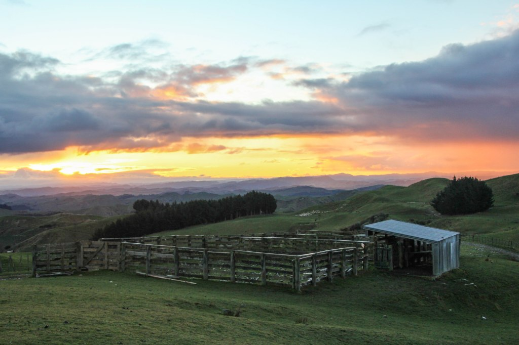 Sun set on the sheep yards taken looking west from Mt Curl in the Rangikei. 10x12 canvas $200