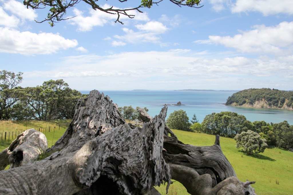 Gnarly old Pohutukawa stump, with added scenery