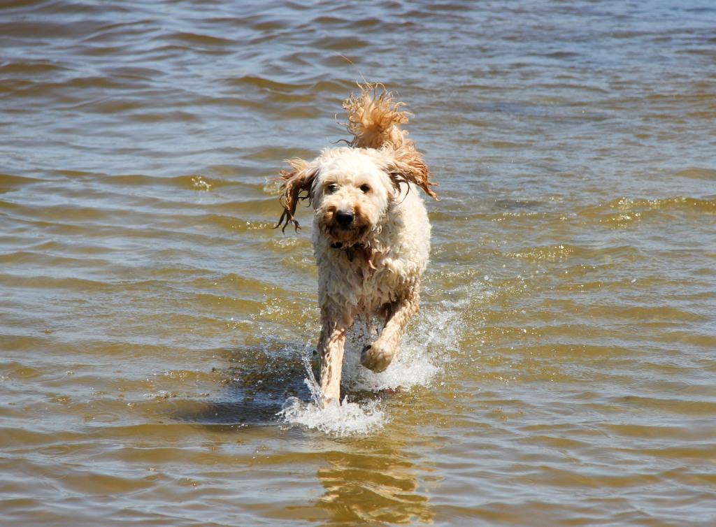 Shackelton at the beach