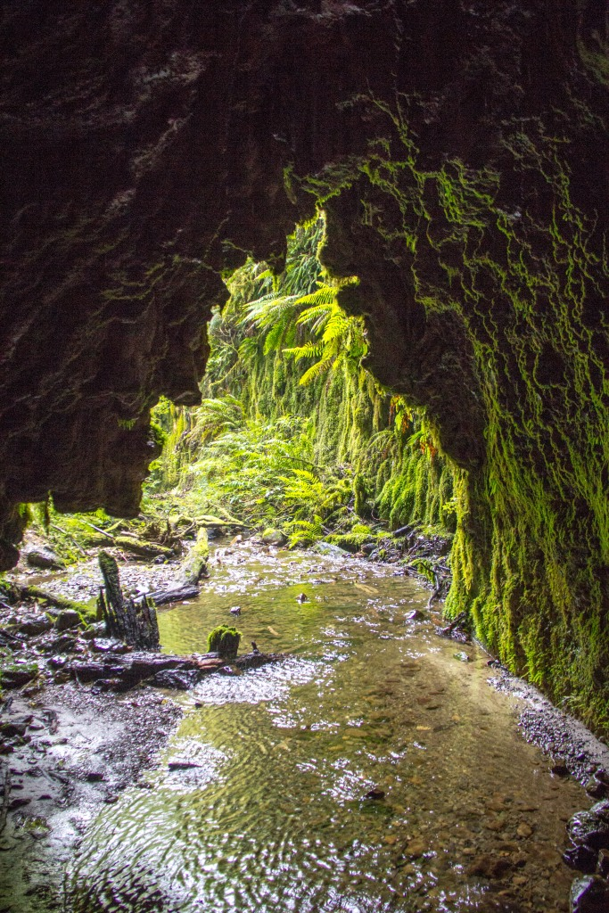 This is inside a glow worm cave most people are unaware of. It's about an hour from my house.