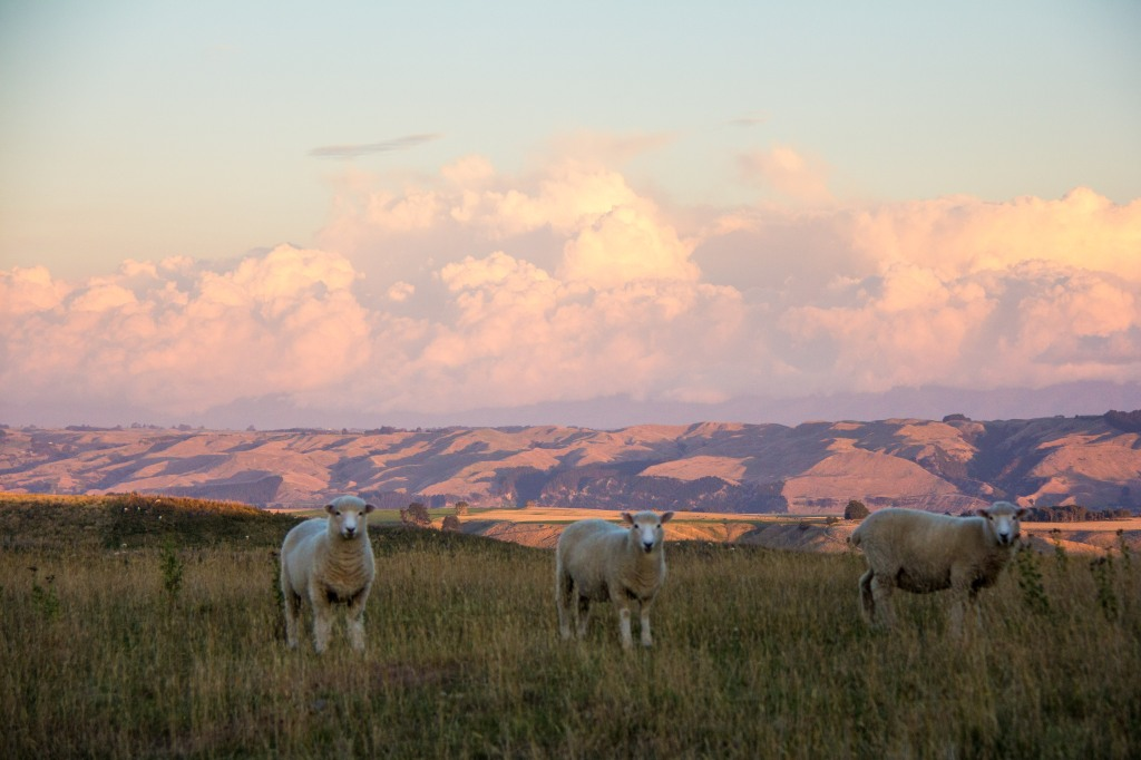 Rule of thirds, New Zealand style. Looking East towards the Manawatu.