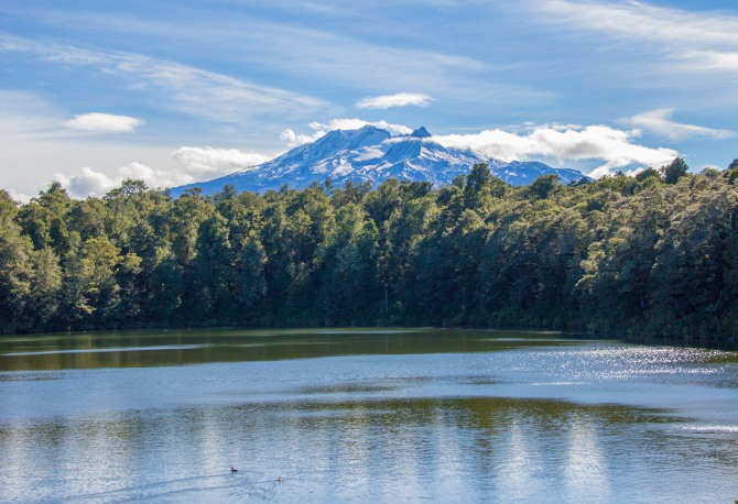 There's that Mt Ruapehu again. I found this lake, in the forest. As you do. OK, I had to walk about 15 minutes to get to this one.