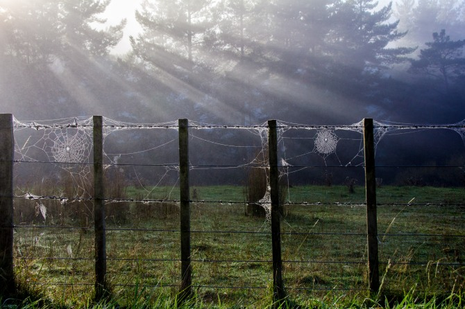 Early morning sun, mist, trees, fence and spiders webs combine for a this arty number. It reminds New Zealanders of when they were little, apparently grown ups don't look for dewy spiders webs.