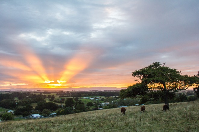 You've heard of the Verve song, 'The drugs don't work'? This is the rural version 'The cows don't care'. Sunrise in the Manawatu.