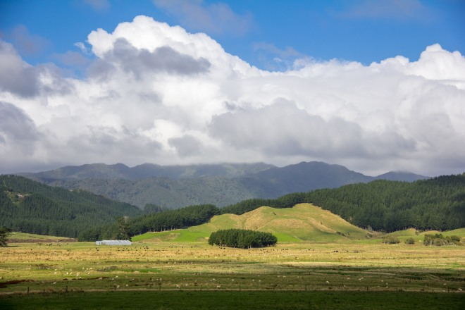 High in the Tararua Ranges. I drove up the creatively named Heights Road to get here.