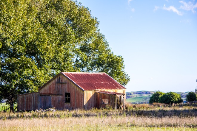 Derelict woolshed, near SH54, the Vinegar Hill road. Nobody knows why it's called Vinegar Hill.