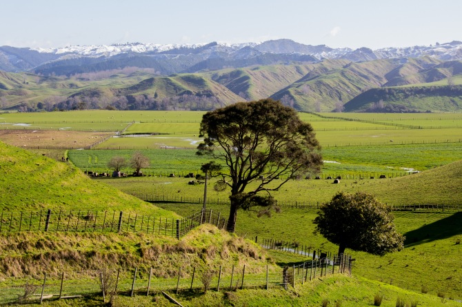 The photo is straight, the trees and power pole are on a lean. Rangitikei farm land