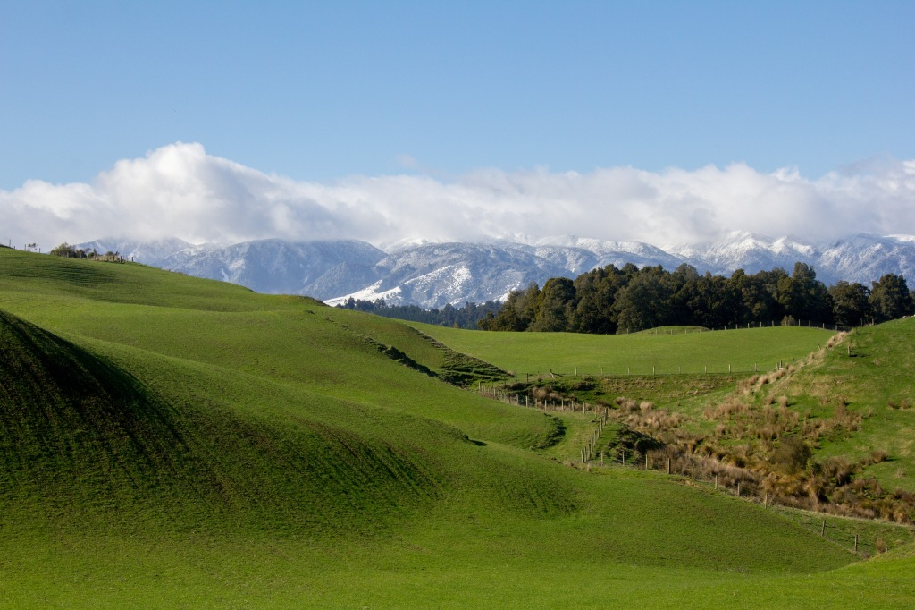 That's a farm paddock, not a golf course, this is where we grow your Sunday Roast lamb. This is winter, those are the Ruahine Ranges.