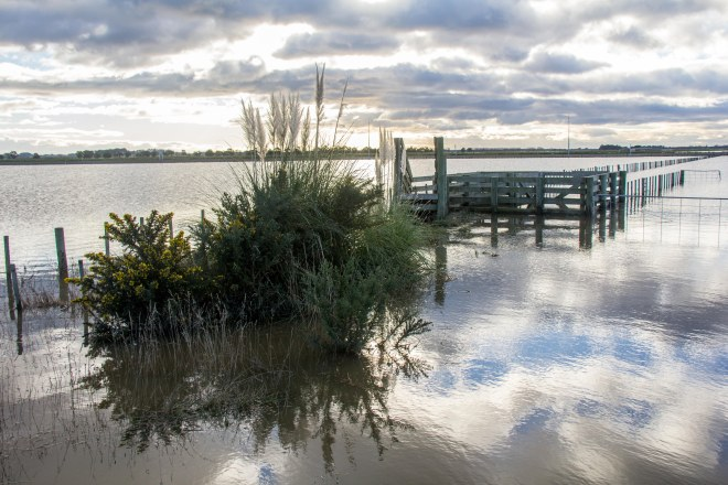 Looks pretty, it's disastrous, those are flood waters. Manawatu flats under water. The Manawatu river is a long way from here.