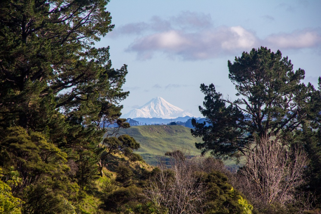 Mt Taranaki through the trees. Those trees are just in front of me, Mt Taranaki is over 180 kilometres away