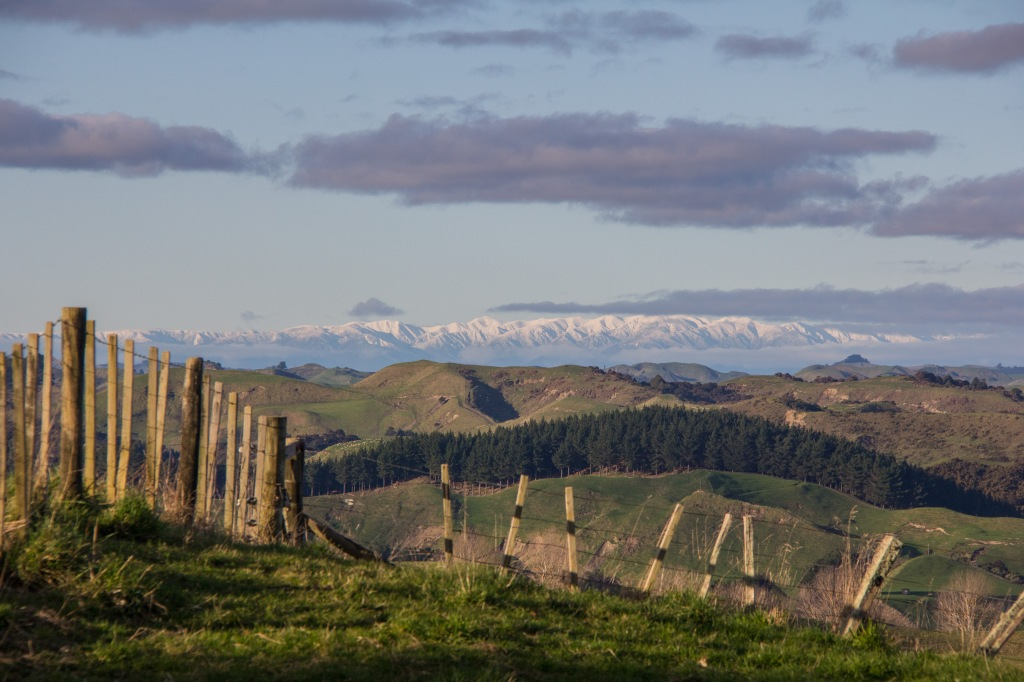 Late afternoon, looking across the Rangitikei from Kauangaroa Road. It's the road from Hunterville to Fordell.