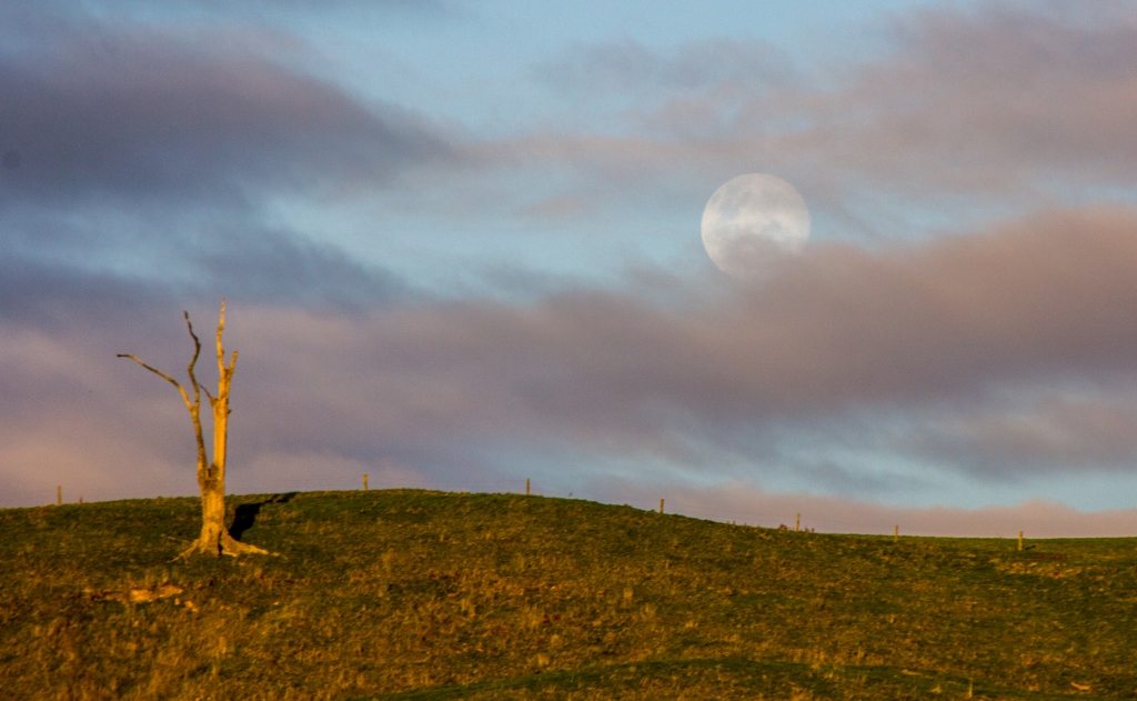 Full Moon, dead tree, moody evening