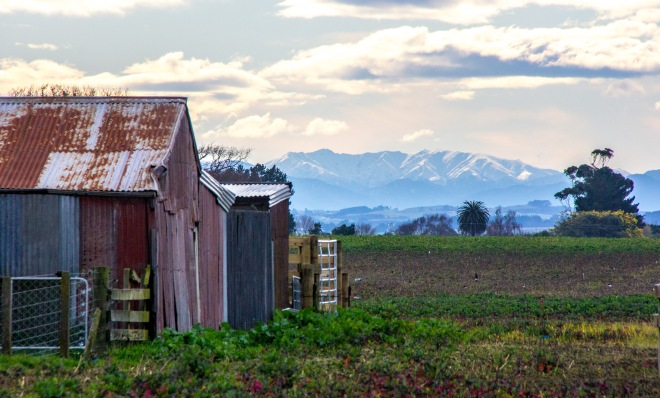 Old barn, farm paddocks and the Ruahine Ranges. Stark light, morning tea time.