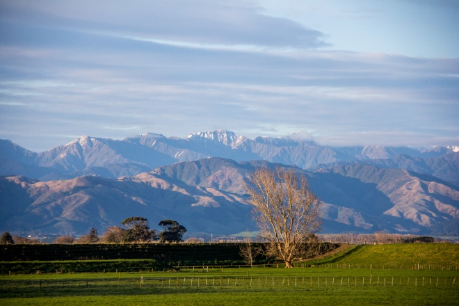 You know what that is? That's an unremarkable view from the side of the road in New Zealand. I bet nobody has ever taken this photo before
