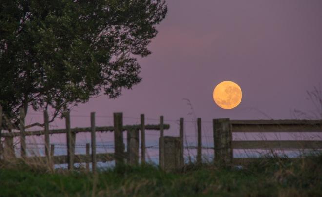 The Moon setting in the Rangitikei