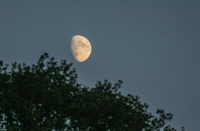 Half moon in leafy Surrey, England