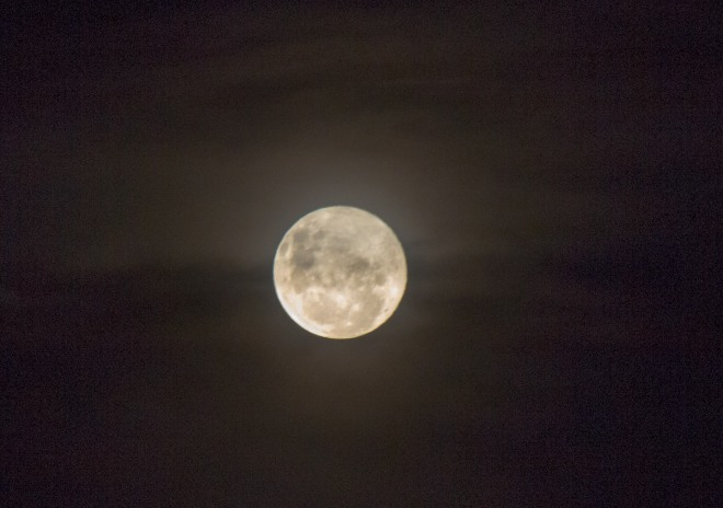 Misty moon. Ok I'm stretching the other stuff in the frame here as the other stuff is just mist. Hunterville.