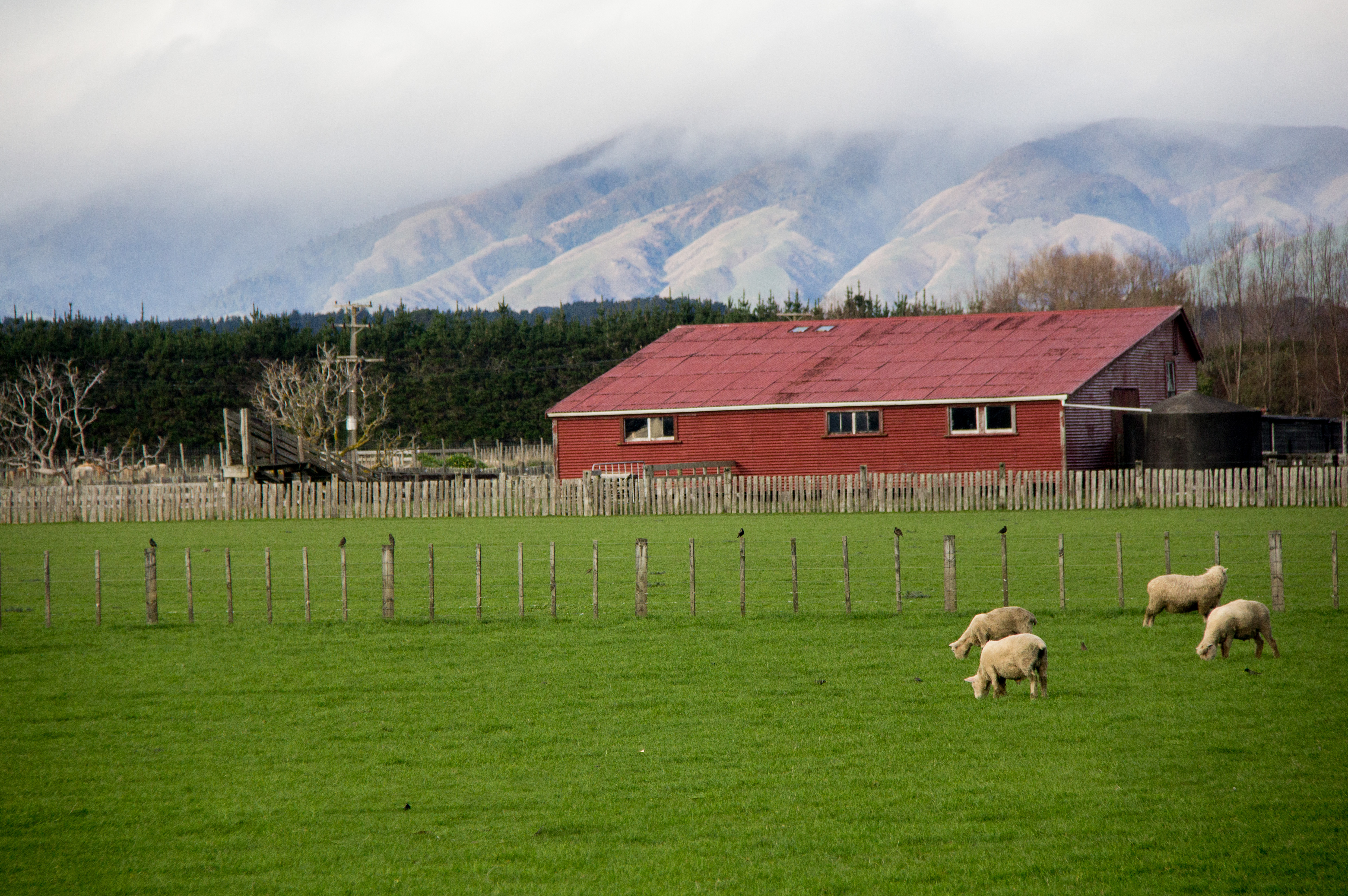 Wool barn after