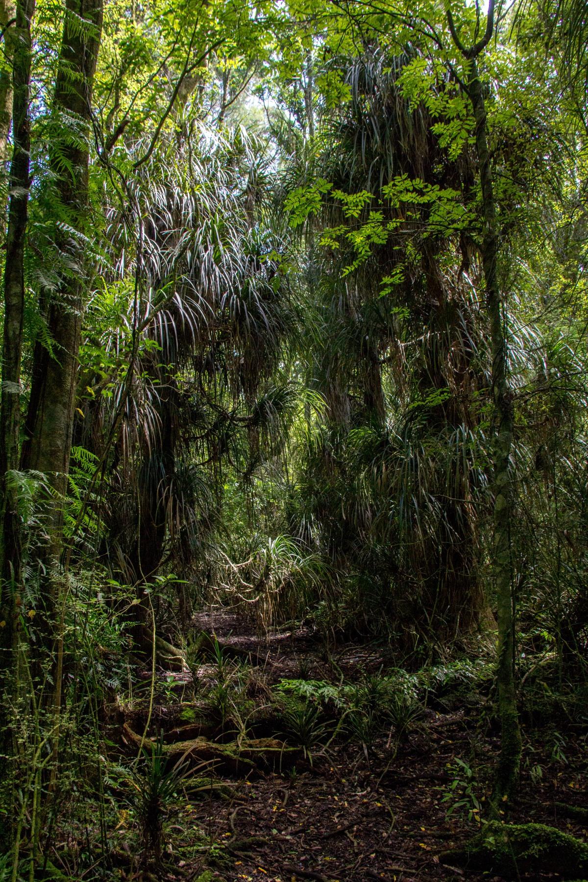 Jurassic path