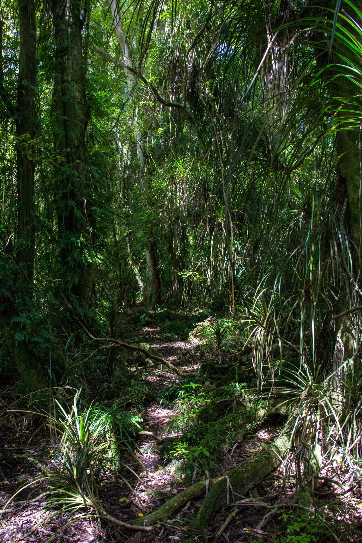 Jurassic path3