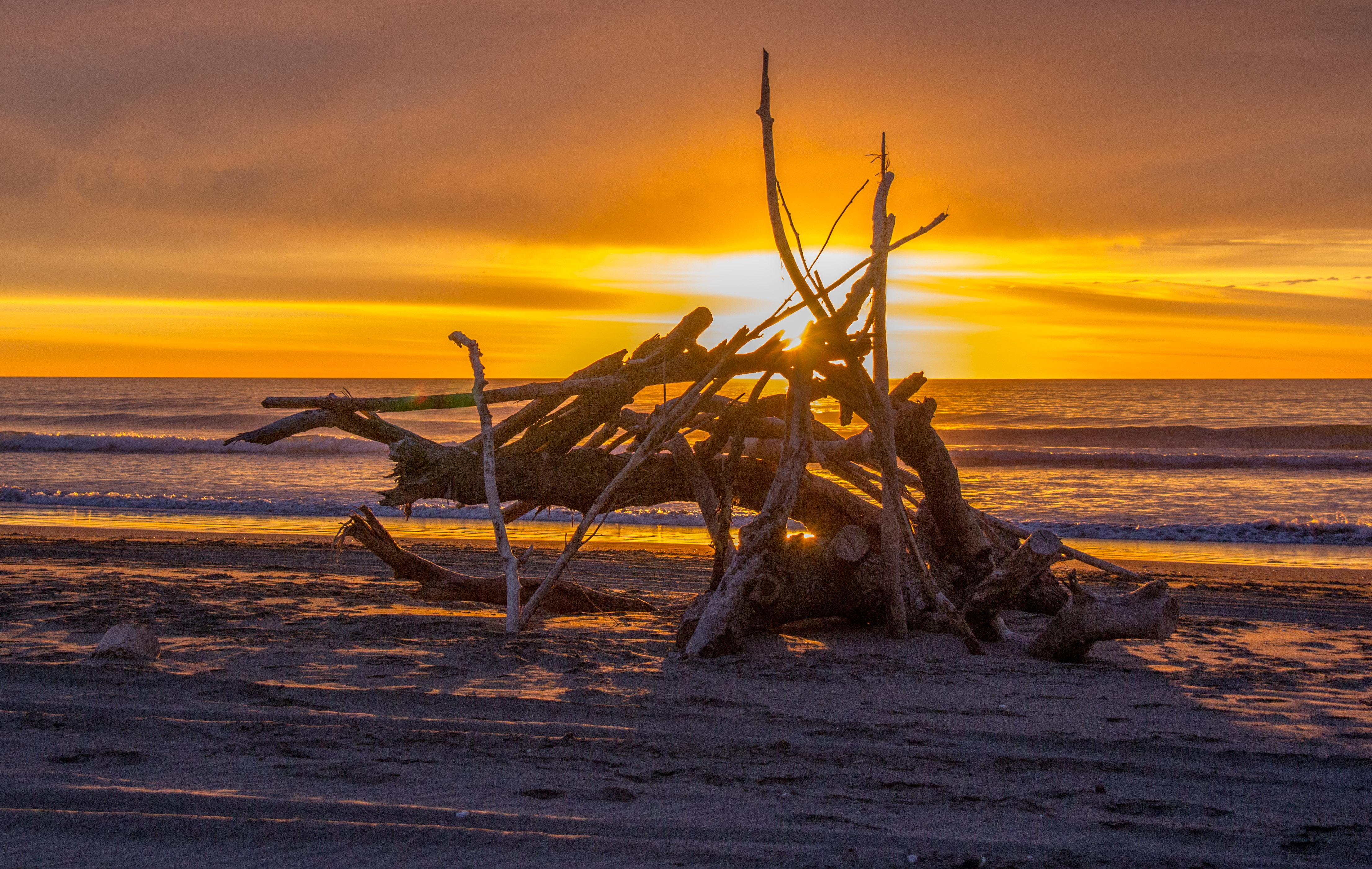 Beach driftwood stack