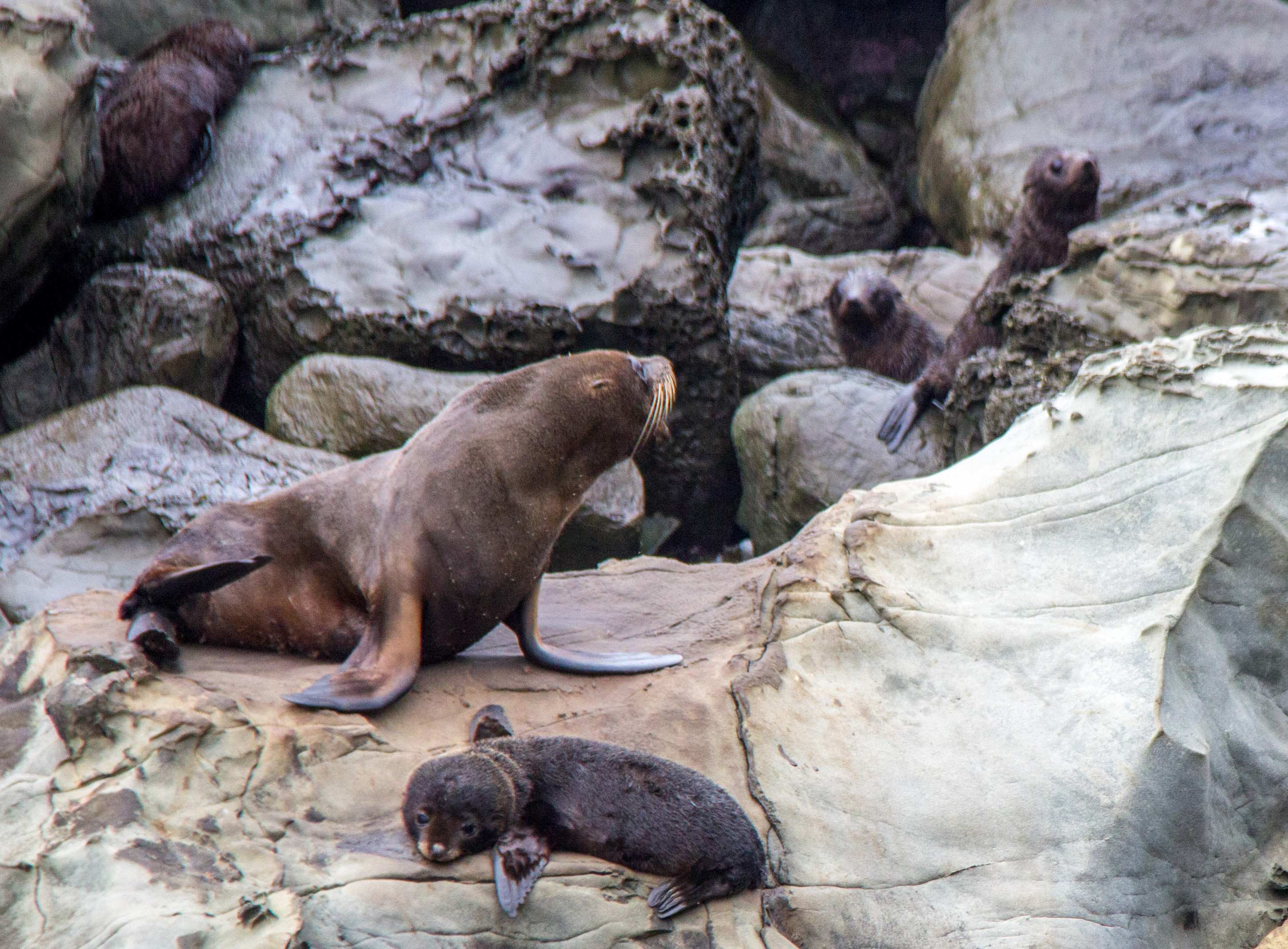Seal pups misbehaving