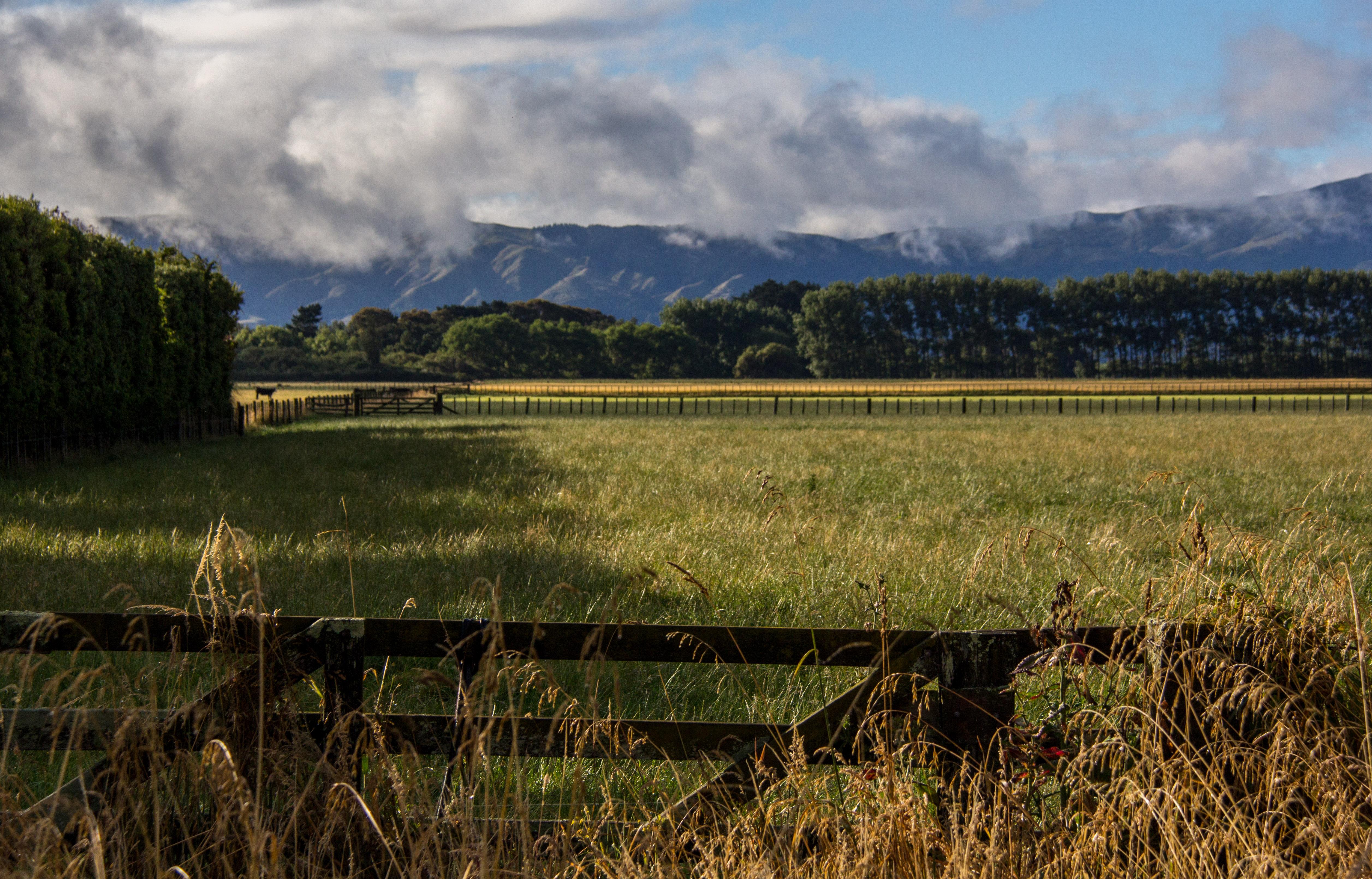 Tararua manawatu morning