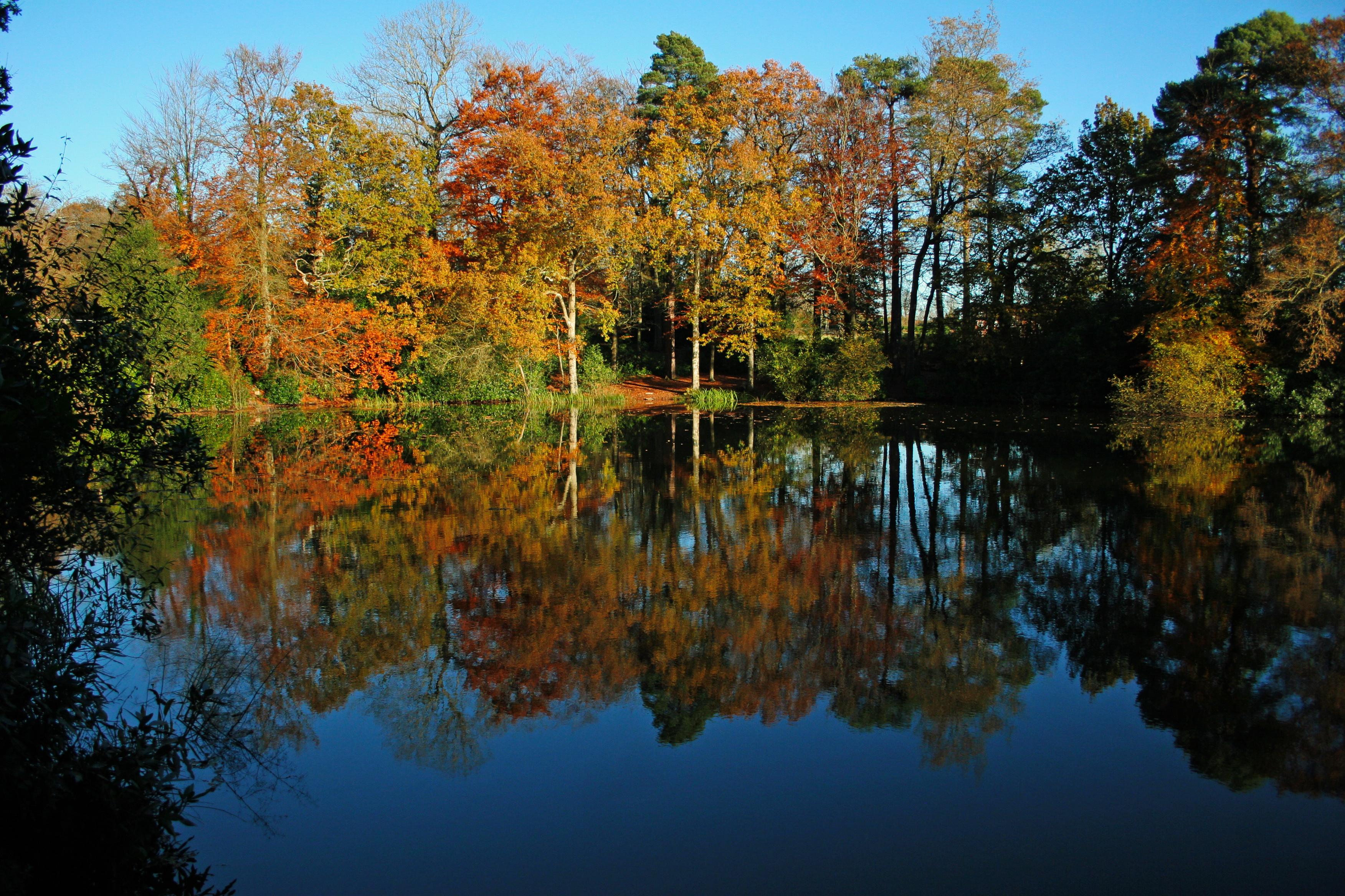 Autumn pond 3