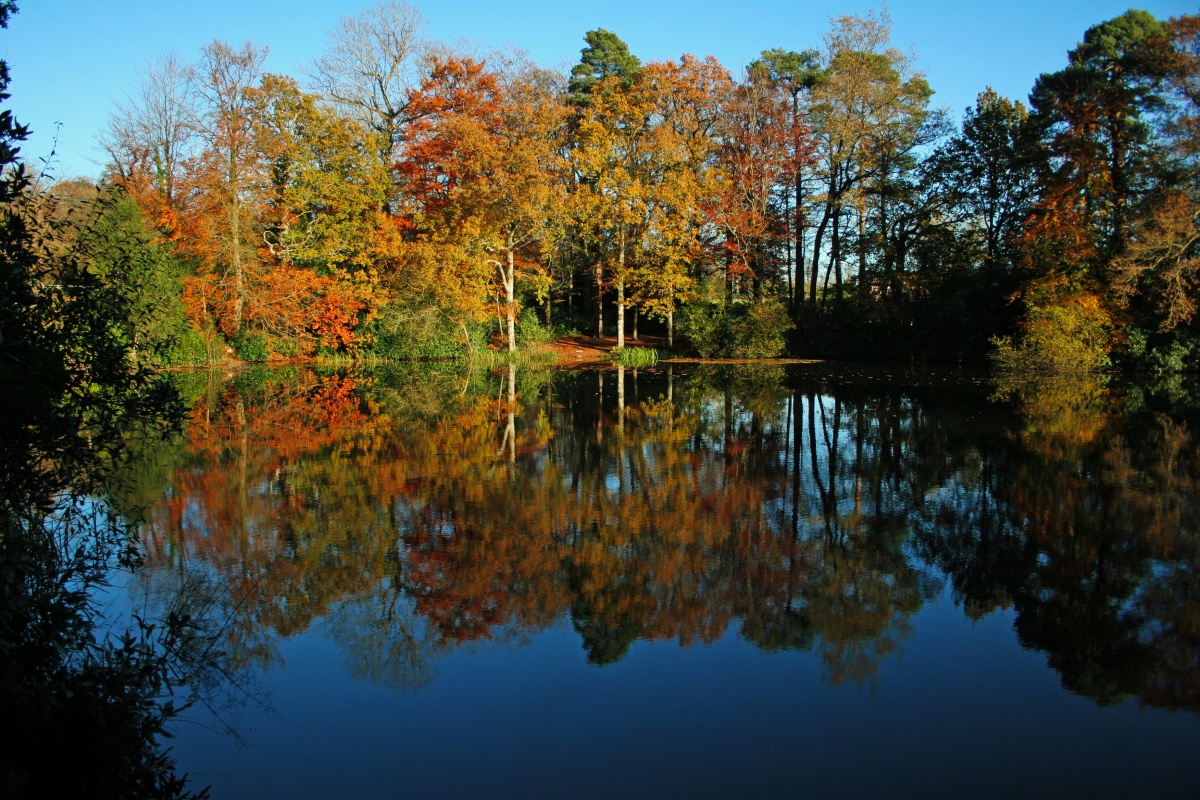Autumn pond 3