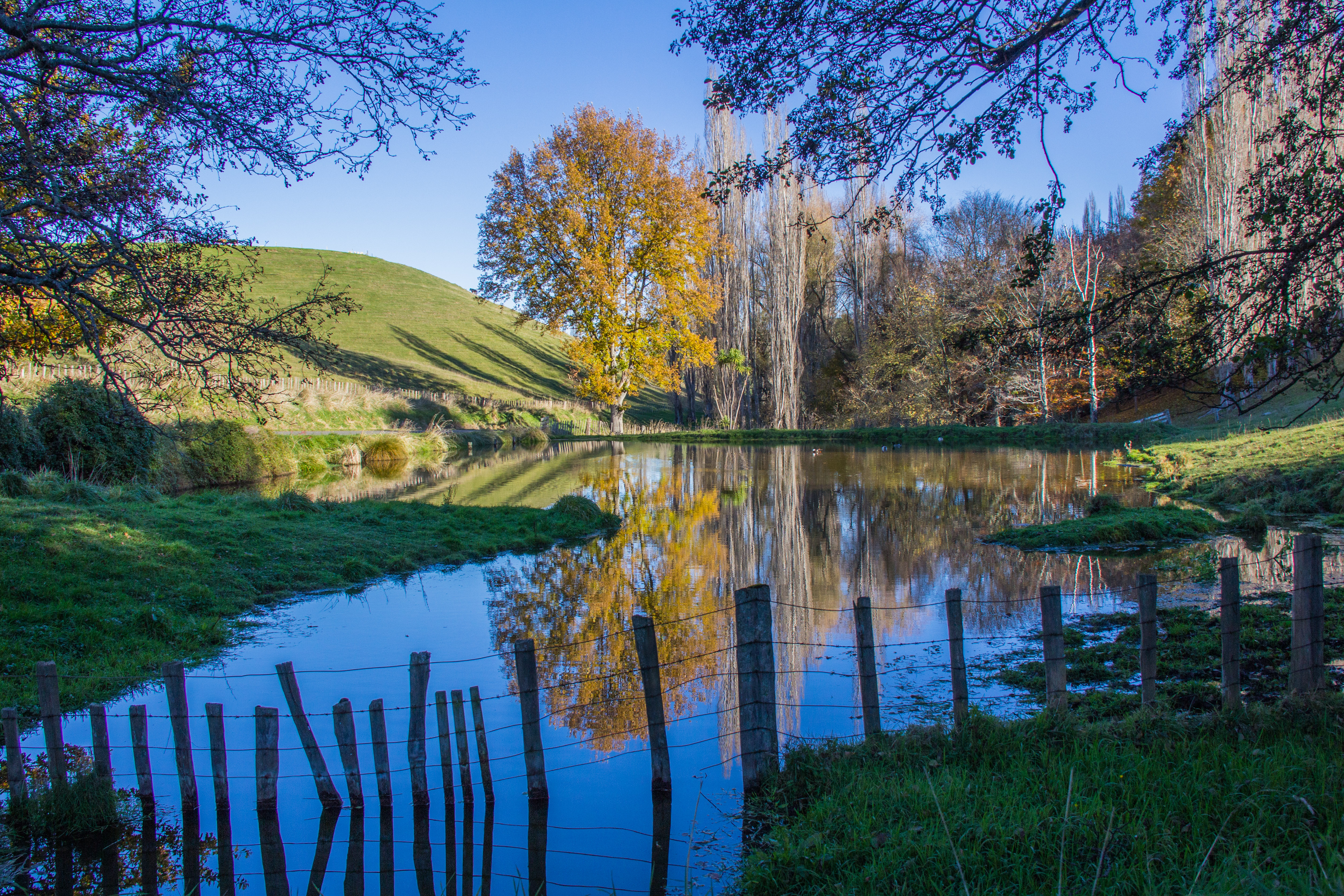 Autumn reflective pond