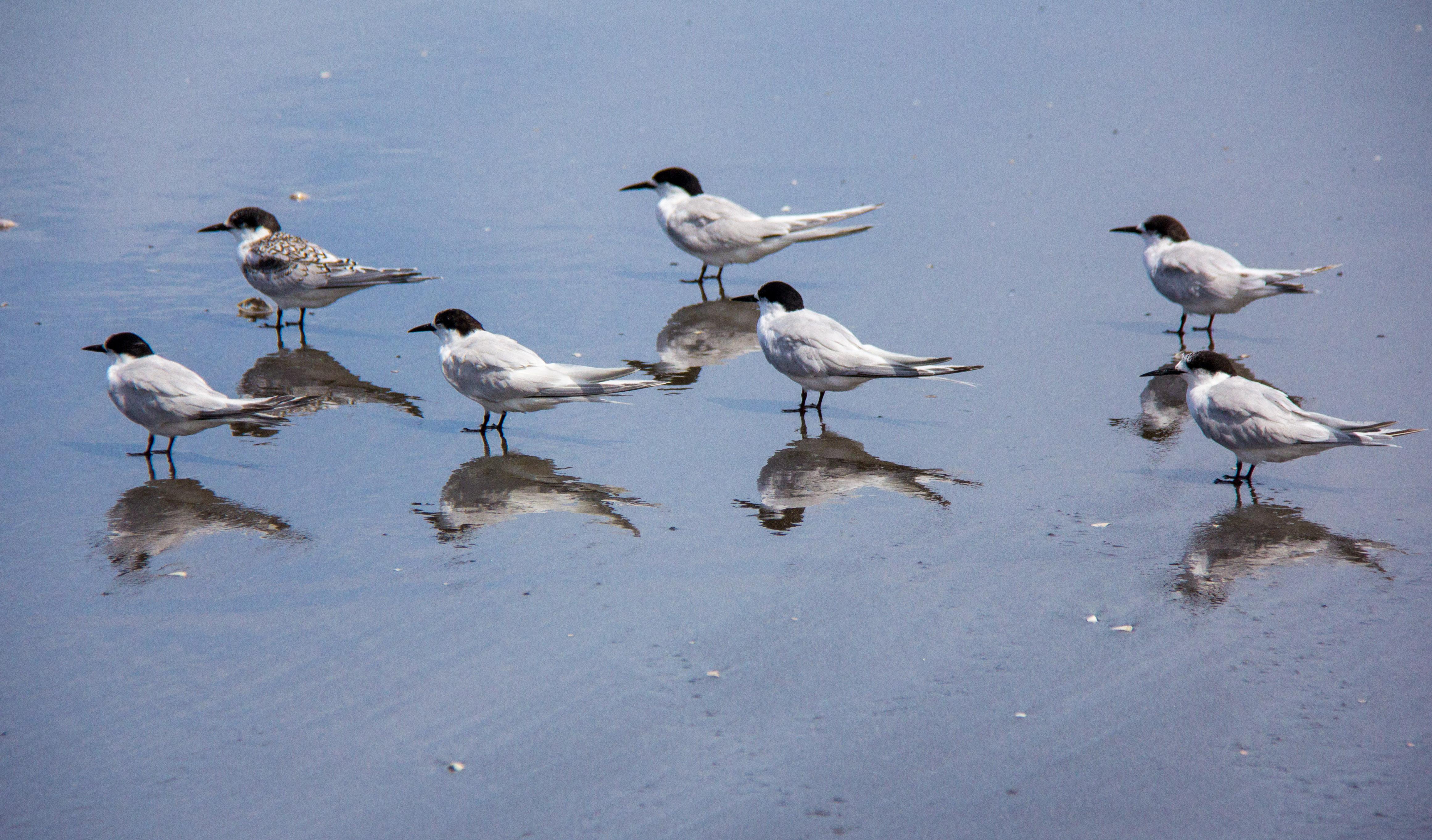 Tern reflection focus