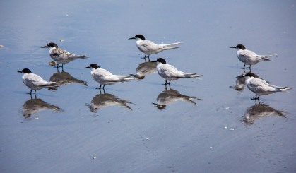 Tern reflection focus