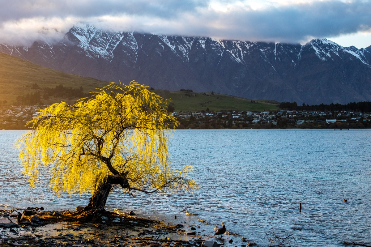 queenstown-tree