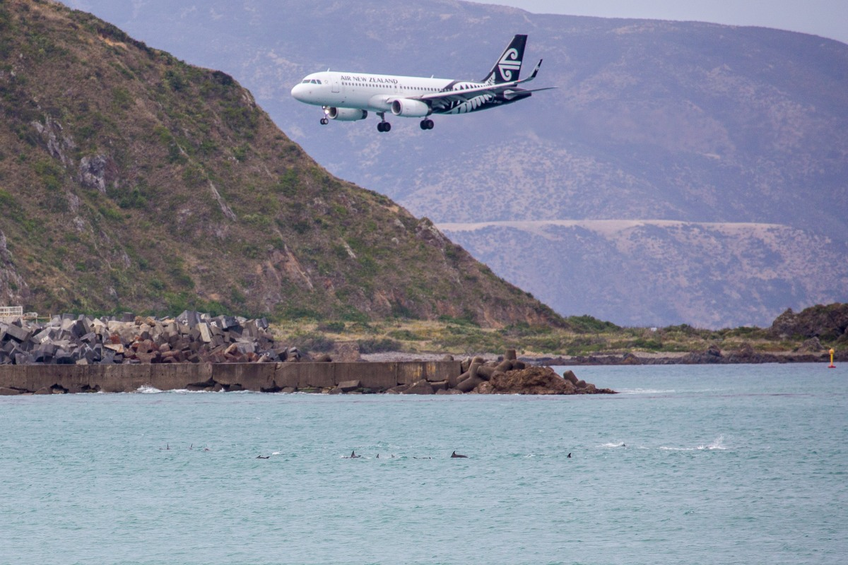 Dolphins AIr NZ