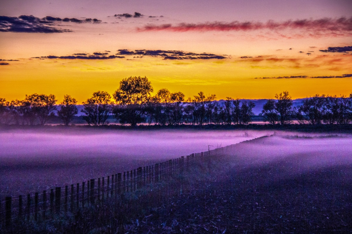 early-mist
