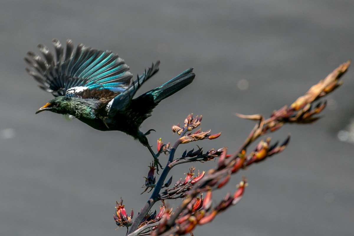 tui-step-off