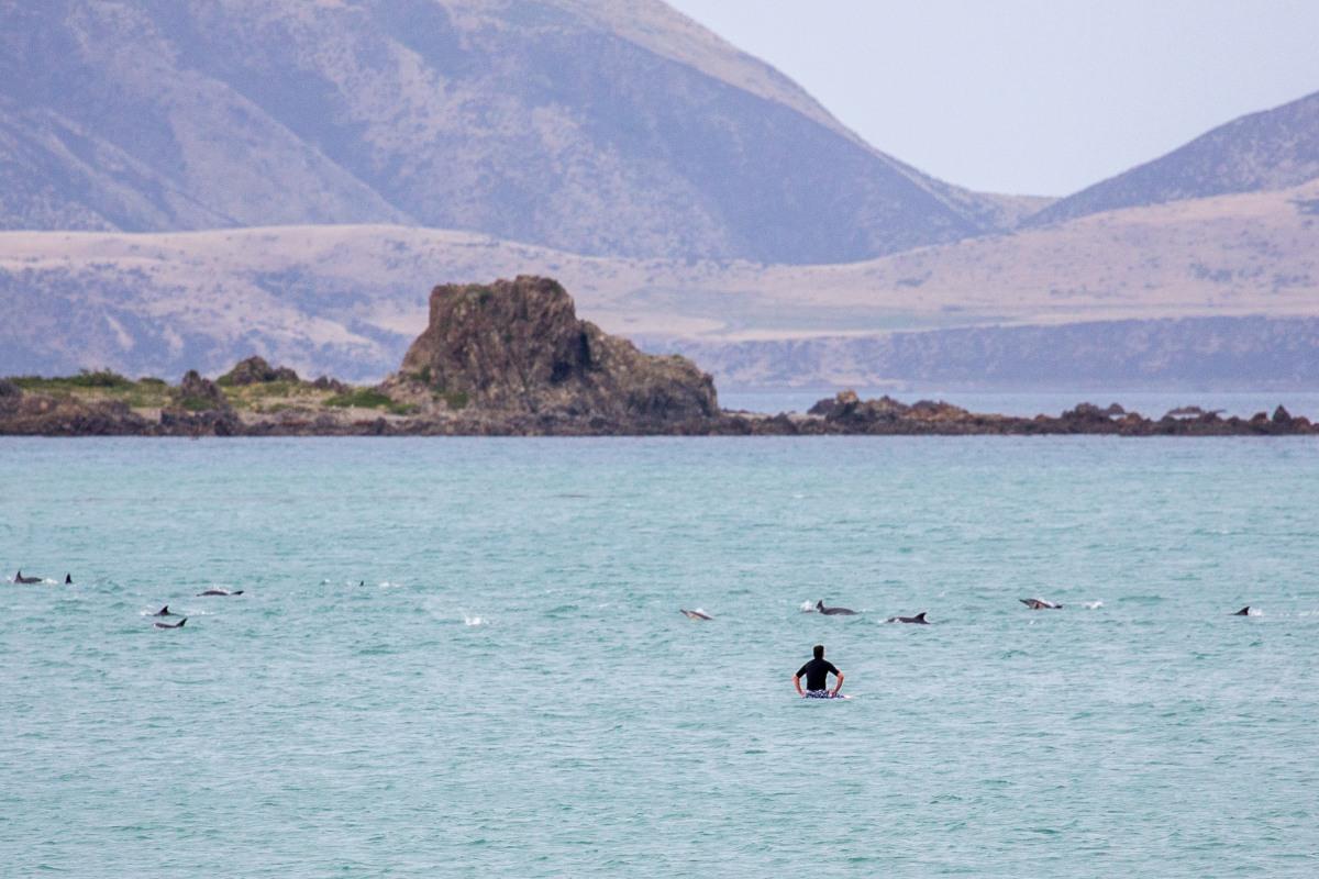 Dolphin Watcher