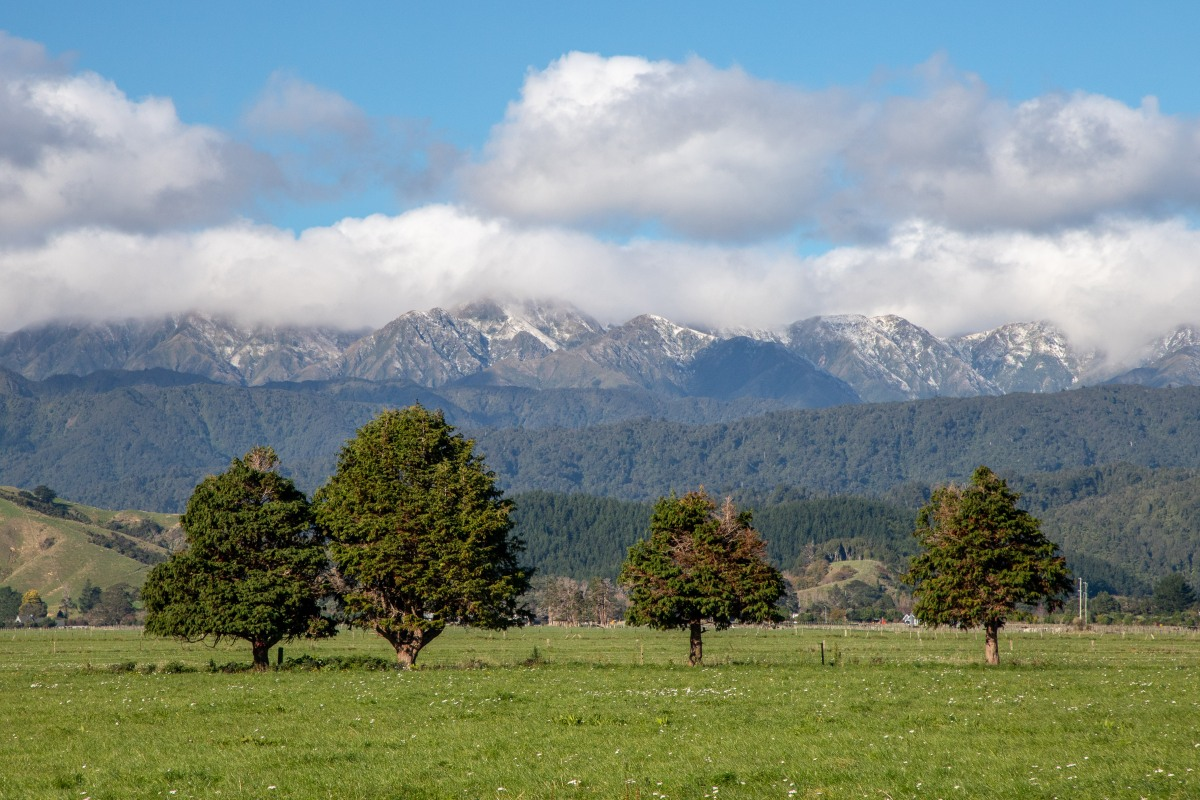 Trees and Tararuas