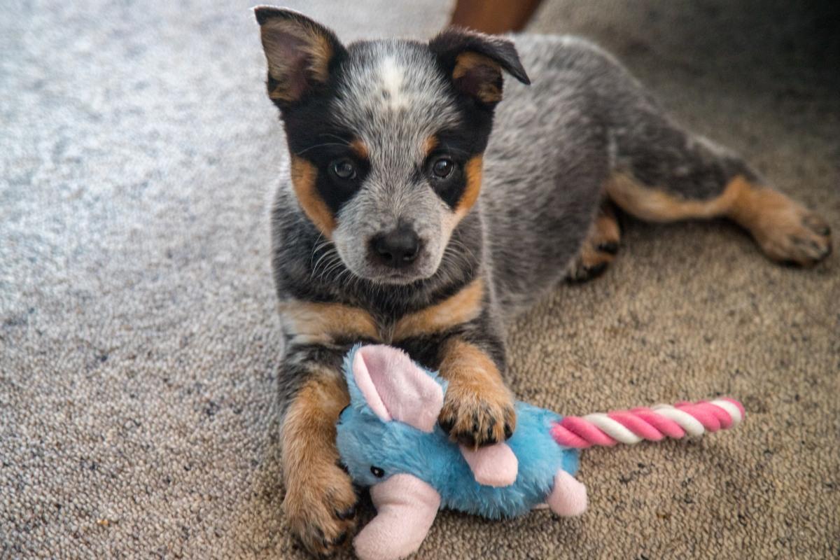 Tessa Puppy 2