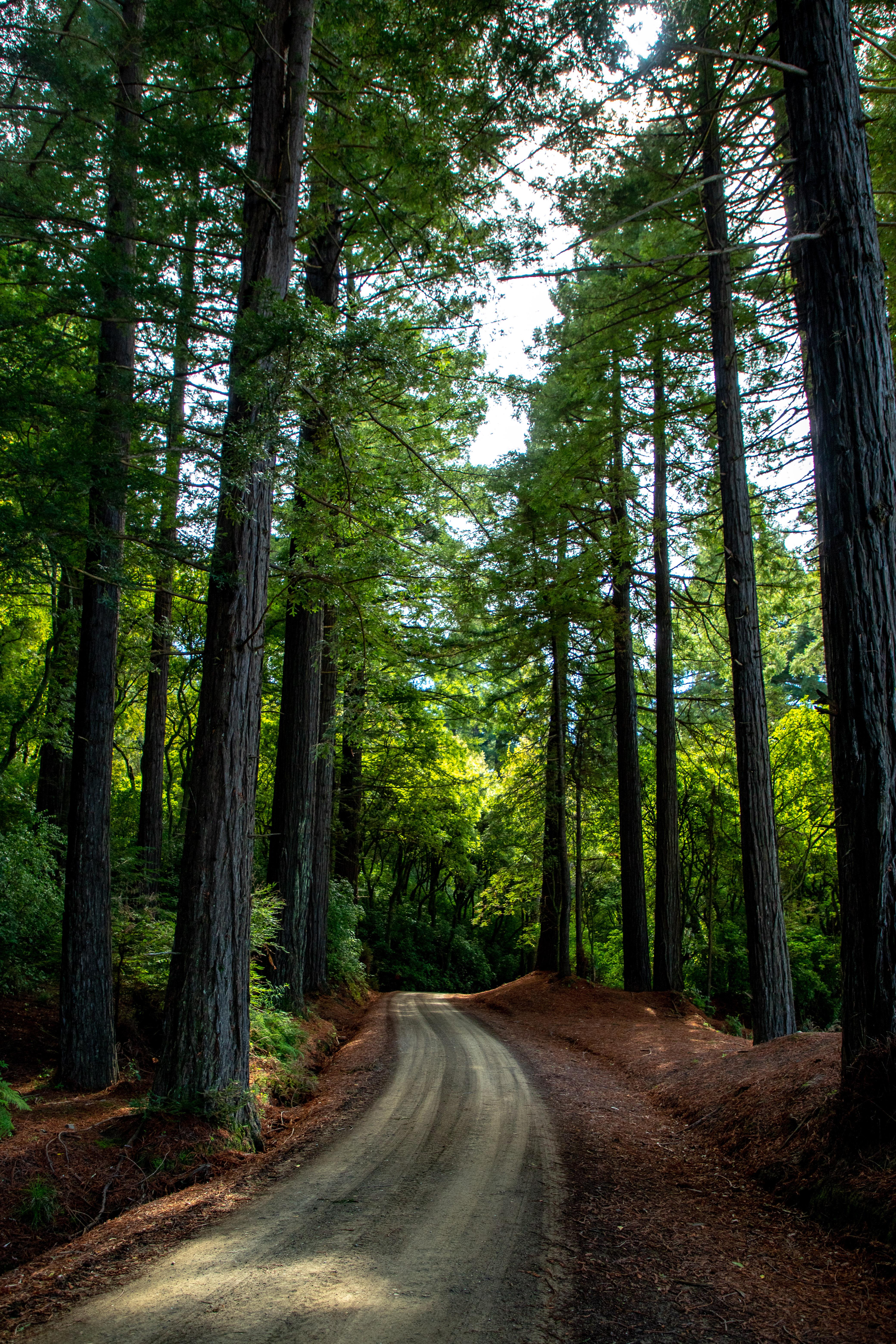 Tree lined driveway tall